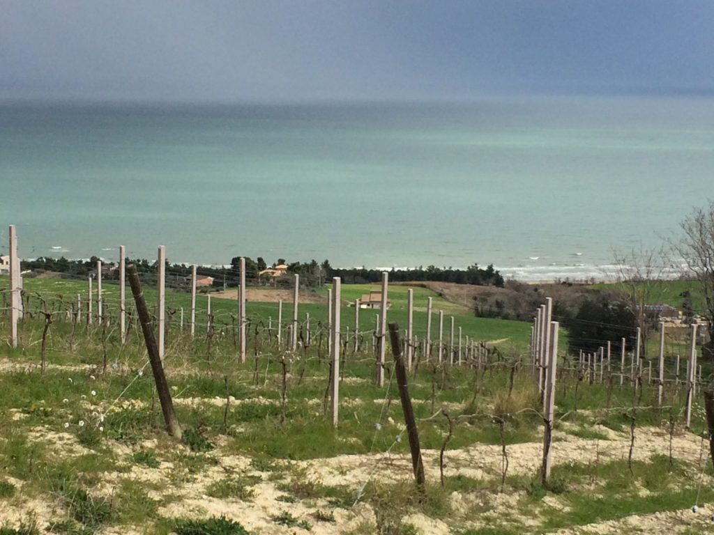 discovering abruzzo wines: the Adriatic sea