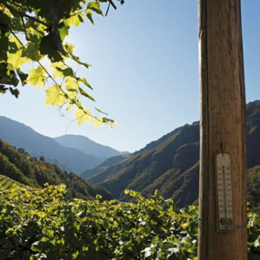 alto adige south tyrol wines